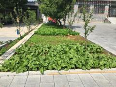 菜园展示 (1)