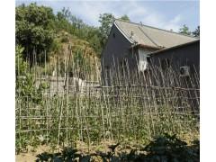 易水湖农家小院菜地