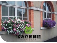 窗台立体绿化