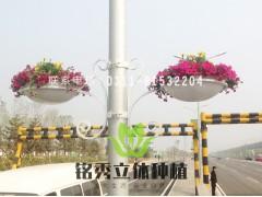 灯杆立体绿化