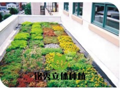 屋顶平面绿化