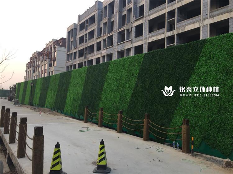 铭秀植物墙案例集-18年 威县盛世天骄