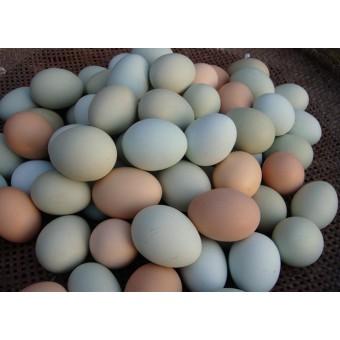 柴鸡蛋(2)