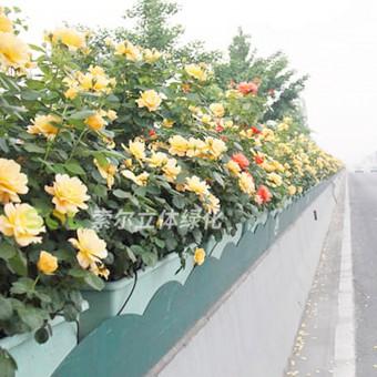 高架桥绿化