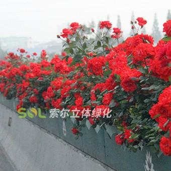 高架桥景观提升