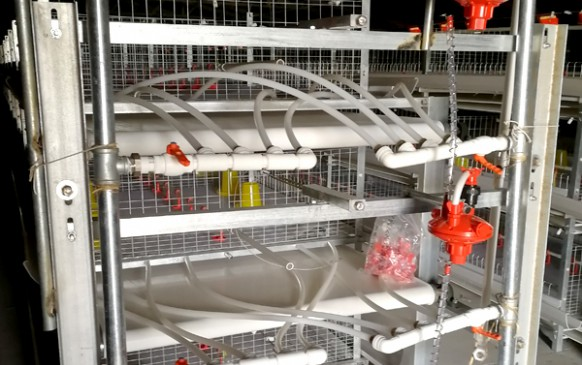 鸡舍内部水暖设备