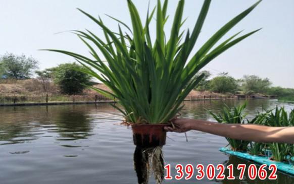 沧浪渠生态治理及水污染处