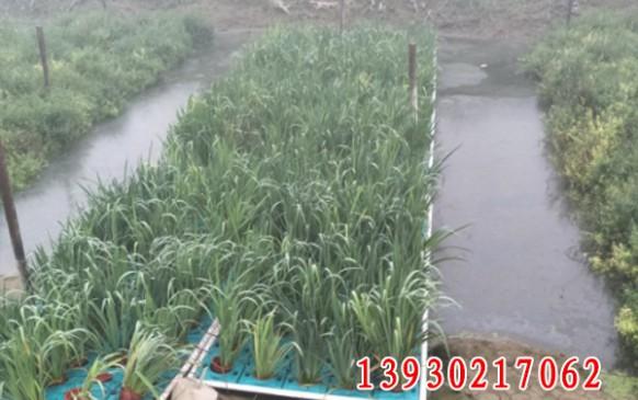中机国际研究院定远河水环境治理项目